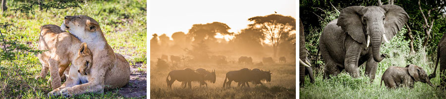 Unique African Experiences